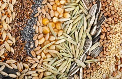 подготовка семена для посева