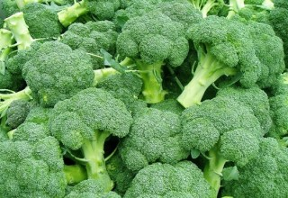выращиваем брокколи