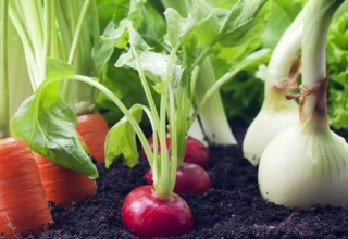 экоудобрения для огорода