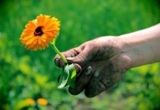 как очистить руки после работы в саду
