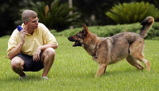 собака друг фото