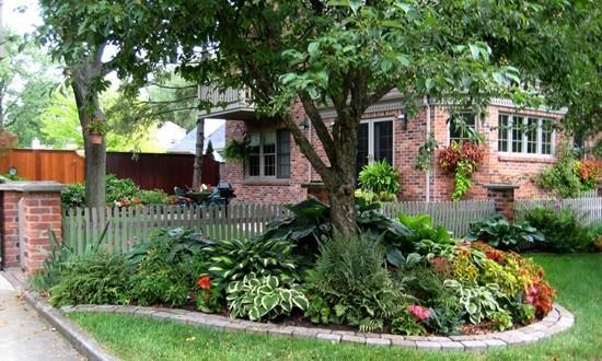 какое дерево посадить возле дома фото