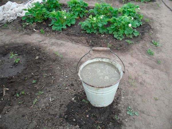 Как правильно удобрять землю разведенным куриным пометом
