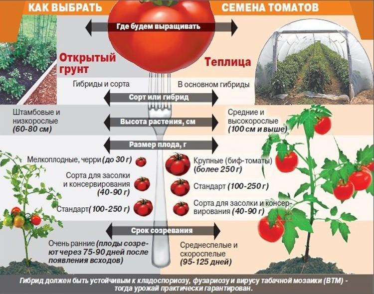 где выращивать помидоры
