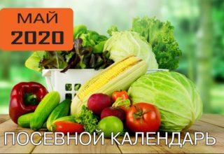 посевной календарь май 2020 для садовода и огородника