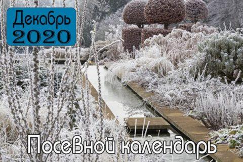 ДЕКАБРЬ 2020 Посевной календарь