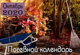ОКТЯБРЬ 2020 Посевной календарь