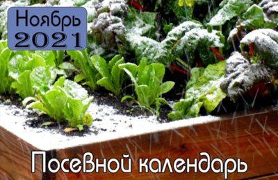 Ноябрь 2021 Посевной календарь