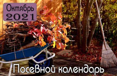 Октябрь 2021 Посевной календарь