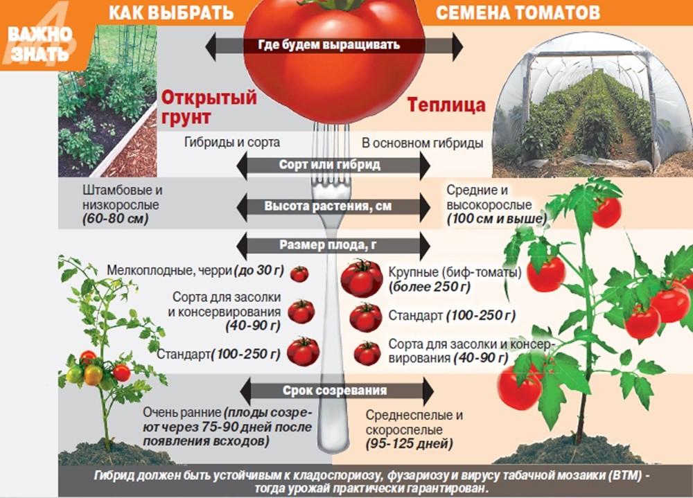как выбрать сорт помидоров