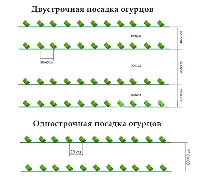 огурцы схемы посадки