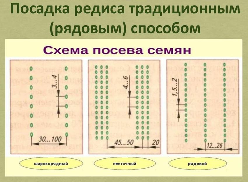 схема посадки редиса