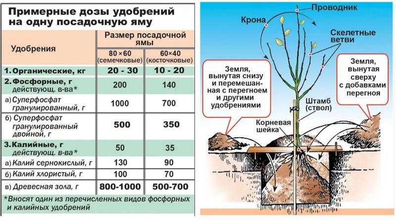 дозы удобрений на 1 посадочную яму