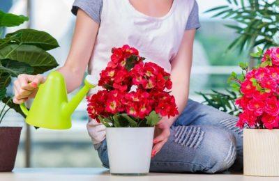 подкормка комнатных цветов