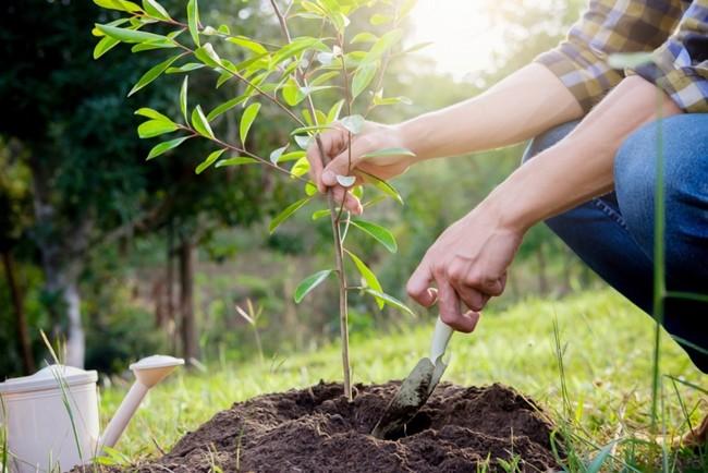 подкормка сада осенью и весной