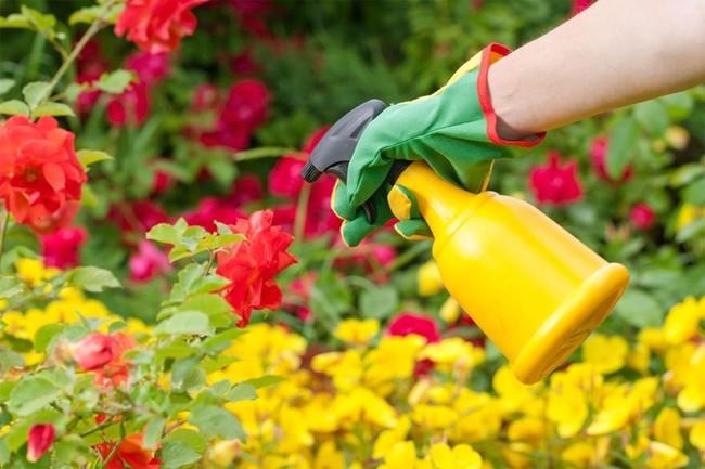 подкормка садовых цветов