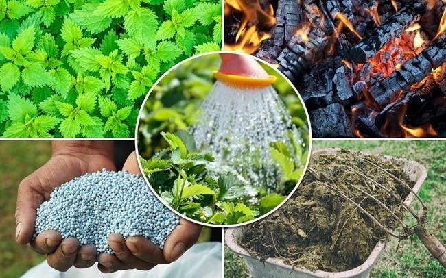 экологические удобрения для огорода