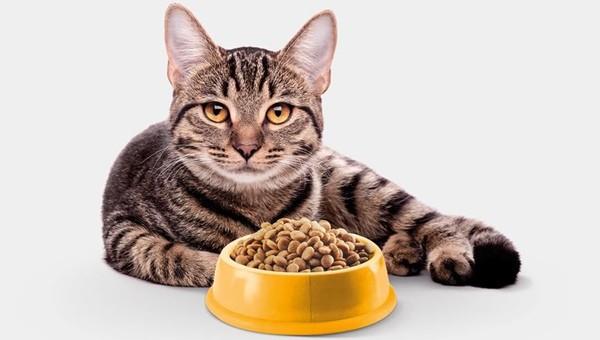 сухой корм и кошка